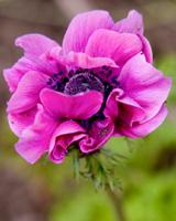 Референс для урока Пишем прекрасный цветок - St'Art