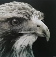 Референс для урока Знакомство с материалами. Разбор рисунка орла - St'Art