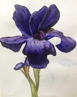 Работа ученика Оксана  по курсу Ботаническая акварель